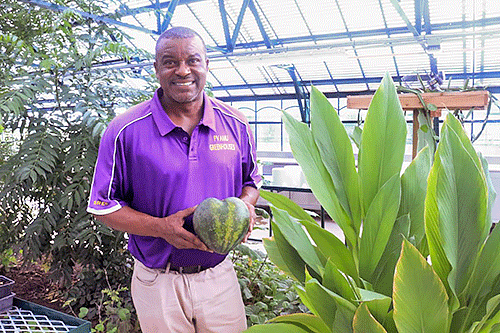 College of Agriculture Research Center's Rafash Brew holds a Mini Love watermelon.