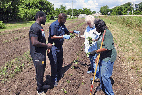 Shaun Francis, Extension horticulture specialist for the University of Arkansas at Pine Bluff, works with participants of the senior center in the community garden.