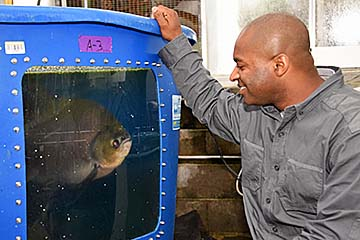 Donald Bacoat observes a large fish in one of the tanks at the Fort Valley State University aquaculture facility.