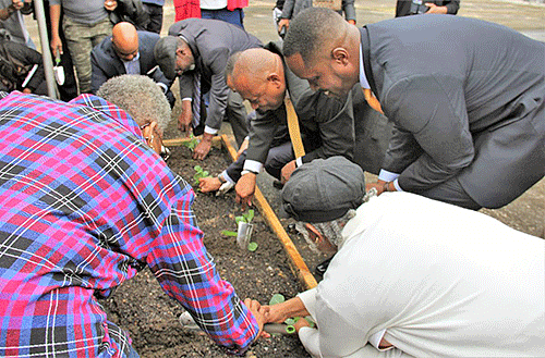Group planting