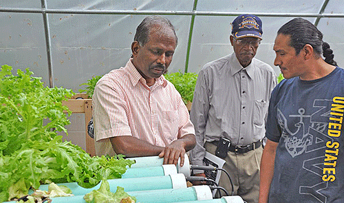 Associate professor Dr. Dharma Pitchay speaks with farmers about hydroponic systems.